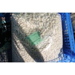 haricot blanc (lingot)